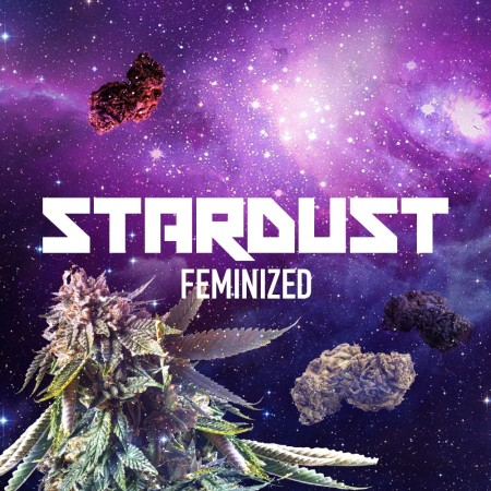 stardust cannabis